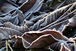 В Україні сьогодні без опадів, лише в Карпатах дощ з мокрим снігом