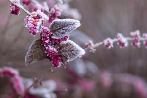 """Немного мокрого снега и """"плюс"""": прогноз погоды на ближайшие дни"""