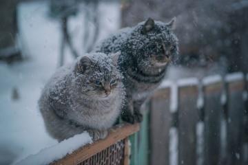 Météo. L'hiver arrive demain, gelées et neige