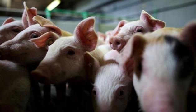 У дев'яти країнах Європи - дуже високий ризик розповсюдження африканської чуми свиней