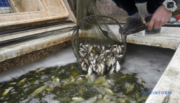 У Південний Буг випустили 300 тисяч мальків «травоїдних» риб