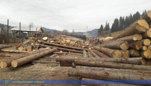 СБУ викрила нелегальний експорт карпатського лісу на мільйони гривень