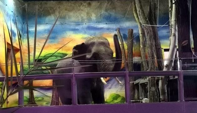 До Миколаївського зоопарку привезли двох слонів