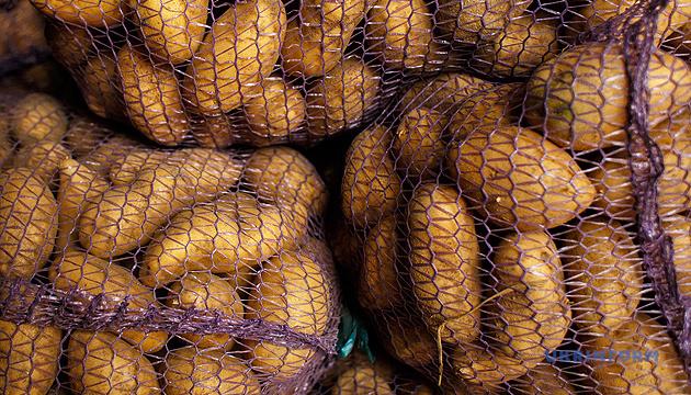 Кабмин планирует ввести программу господдержки картофелеводства