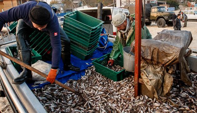 Вилов риби у Чорному морі цьогоріч збільшився на 63%