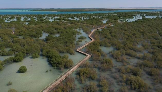 Абу-Даби позовет туристов в лес на воде