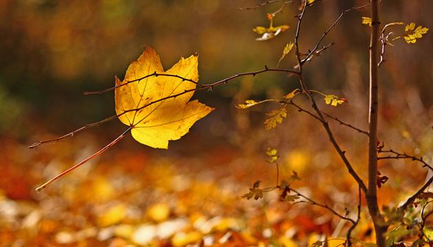 17 ноября: народный календарь и астровестник