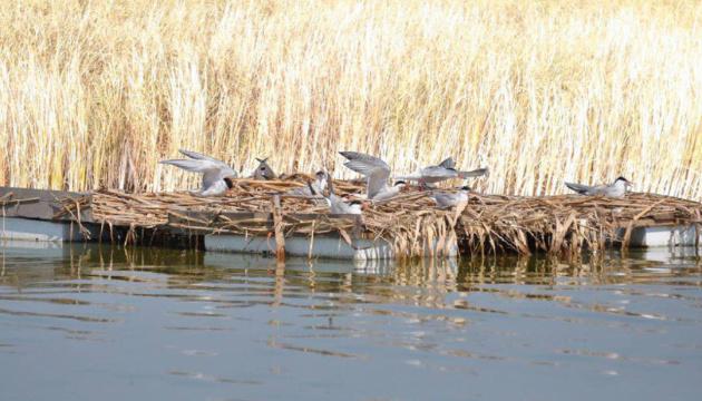 На Бурштынском водохранилище построят искусственный остров для птиц