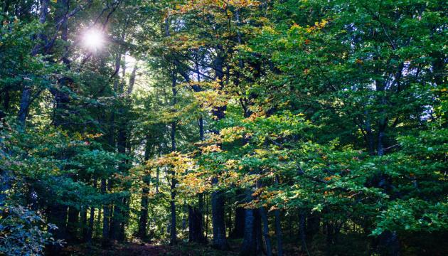 Експерт пояснив, як зробити лісове господарство прибутковим
