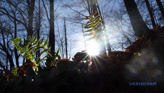 В Україні майже 8% лісів ніким не охороняються — голова Держлісагентства