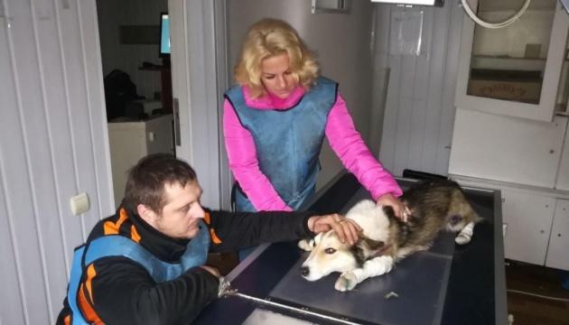 Потерпілого від знущань хмельницького собаку прихистила поліція