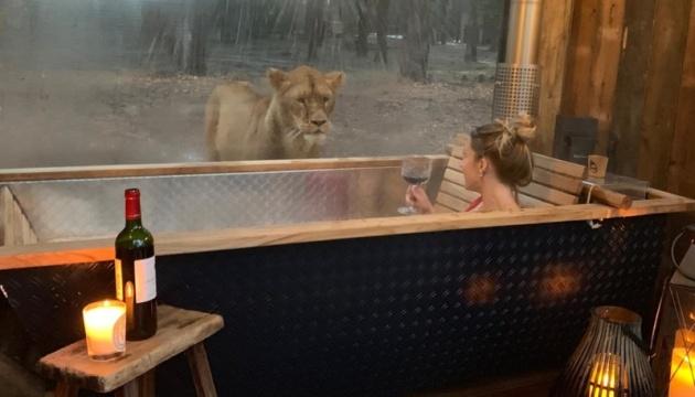 В Англії туристи можуть прийняти ванну в компанії з левами