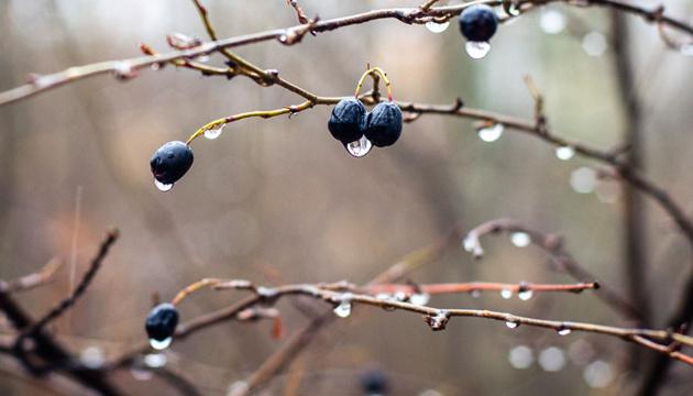 Когда ждать настоящей зимы: синоптики дали прогноз на неделю
