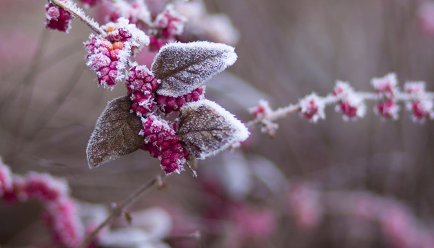 Синоптики обещают мокрый снег и гололед