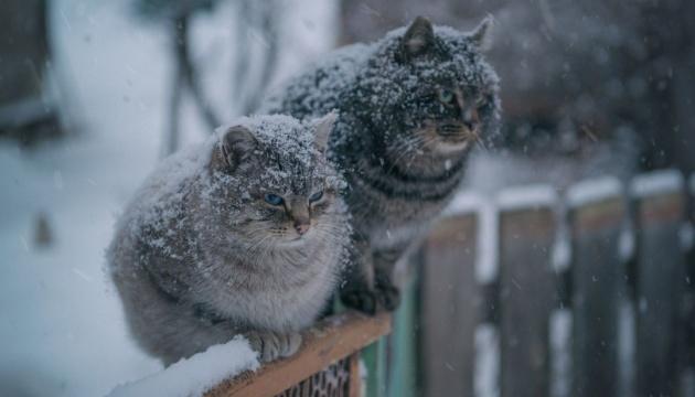 Зима розпочнеться з мокрого снігу