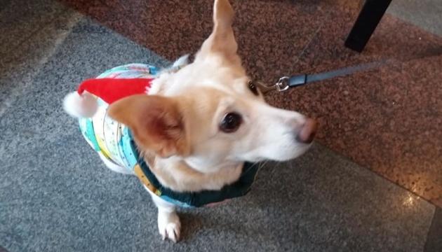 В Житомире устроили дефиле для собак