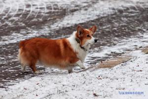 Синоптики обіцяють дощ з мокрим снігом і ожеледицю