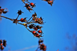 """""""Весна"""" у грудні: синоптики прогнозують до +11° тепла"""