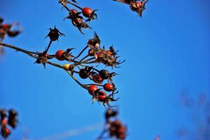 """Весна"" в декабре: синоптики прогнозируют до +11° тепла"