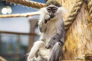 У харківському супермаркеті ловили мавпу, покупців довелося вивести