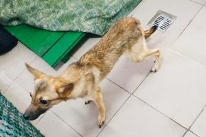 В Харькове забрали в приют шестерых истощенных голодом собак, которых никогда не выгуливали