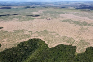 Бразильську Амазонію стали вирубати з подвоєним завзяттям