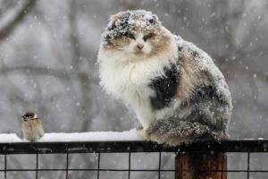 """""""Наколядували сніг"""": у найближчі дні обіцяють сильні опади та вітер"""