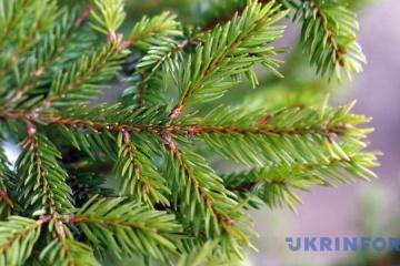 L'Église orthodoxe ukrainienne exhorte à ne pas « tuer » des sapins pour Noël