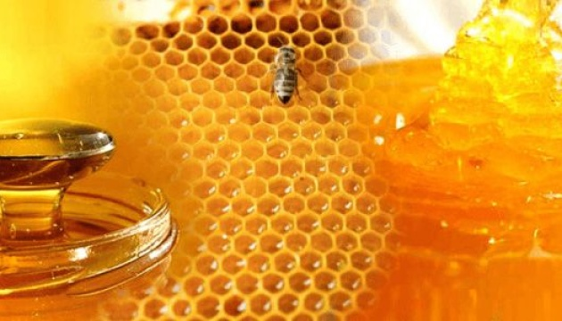 Ukraine to export honey, rapeseed meal to China
