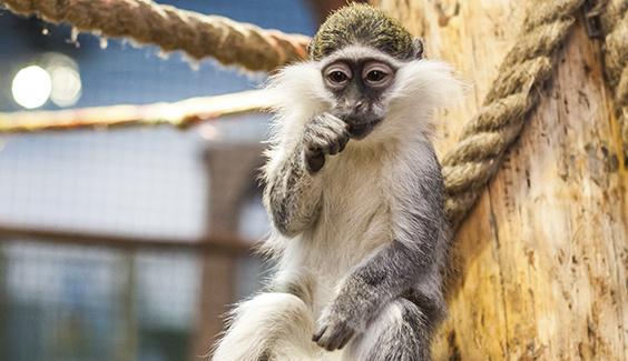 В харьковском супермаркете ловили обезьяну, покупателей пришлось вывести