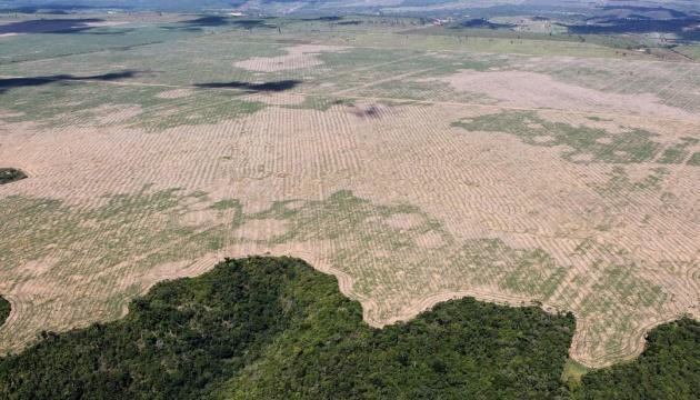 Бразильскую Амазонию стали вырубать с удвоенным рвением