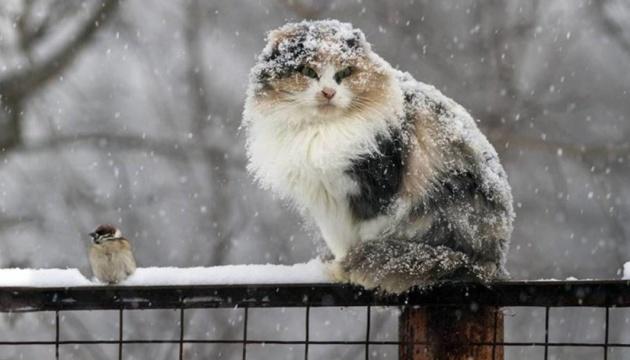 В Україну йде потепління з мокрим снігом та дощем