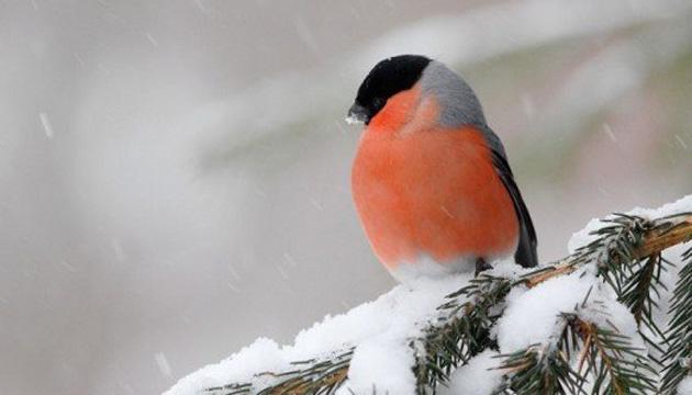 2 декабря: народный календарь и астровестник
