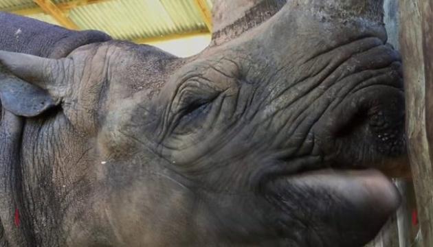 У Танзанії помер найстаріший у світі носоріг