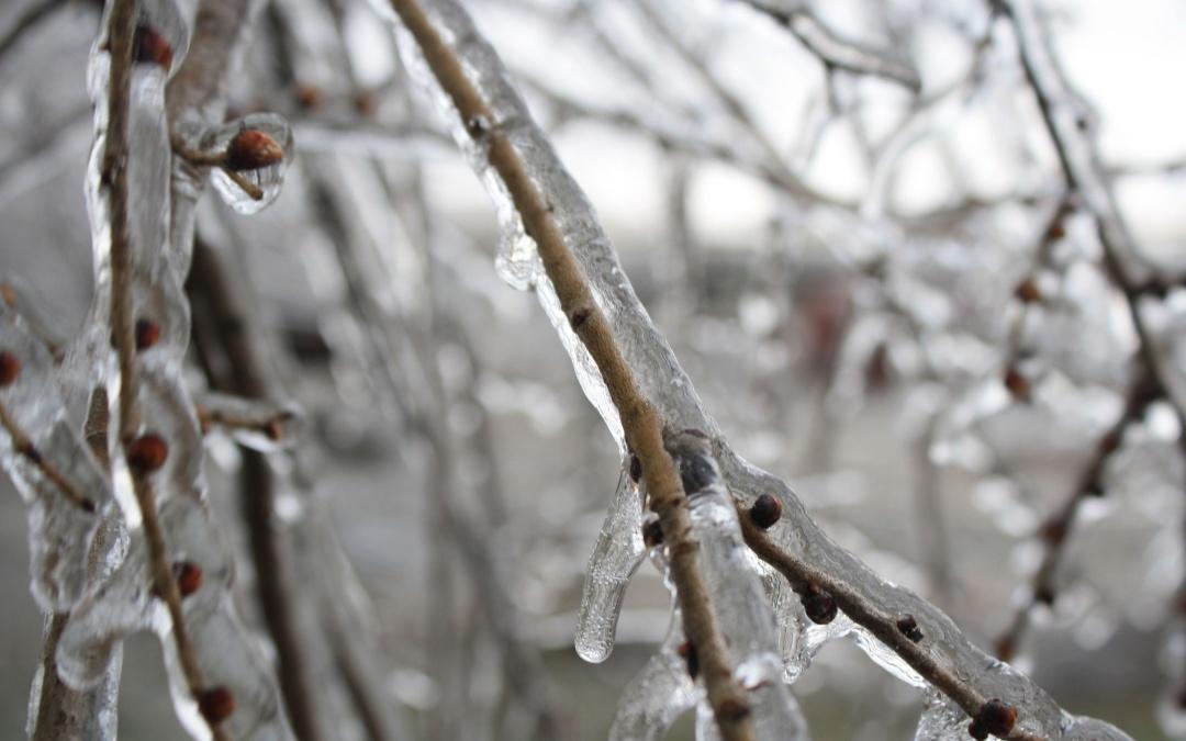 Раптові морози мжуть вдарити по дочасно розкритих бруньках