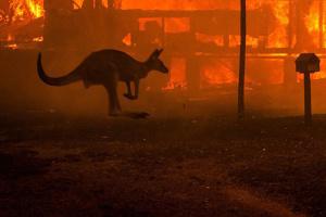 Пожежі в Австралії: бездумність людей і велич людської самопожертви