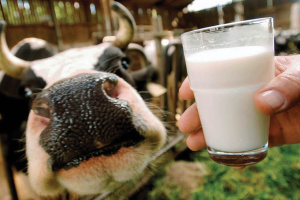 Ukraine's milk production decreases 3.7% in 2019