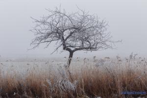 В Україну йде похолодання з мокрим снігом, у Карпатах - хуртовини й вітер до 40 м/с