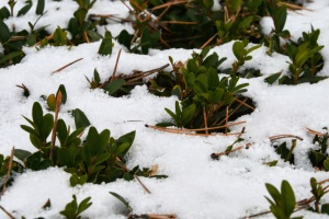 На конец недели прогнозируют от -8° до +12°, местами снег с метелями