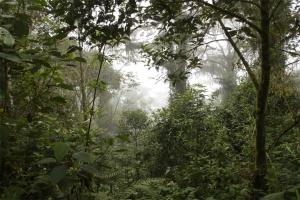 В Амазонии нашли живой женщину с тремя детьми, которые блуждали в лесу 34 дня