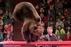 МКМС готовит законопроект о запрете использования животных в цирках