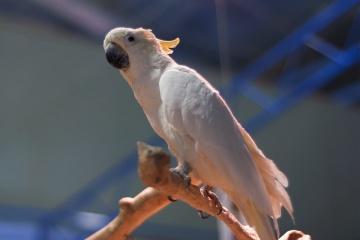 À Kharkiv, des volontaires sauvent 50 perroquets malades abandonnés dans la forêt