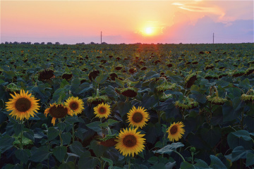 Ukrainian agricultural land reform will have global significance - agrarian policy minister