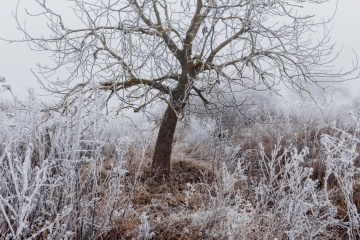 Коли і де чекати сніг: синоптики дали прогноз до кінця тижня