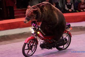 Le ministère de la Culture de l'Ukraine prépare un projet de loi interdisant l'utilisation d'animaux dans les cirques
