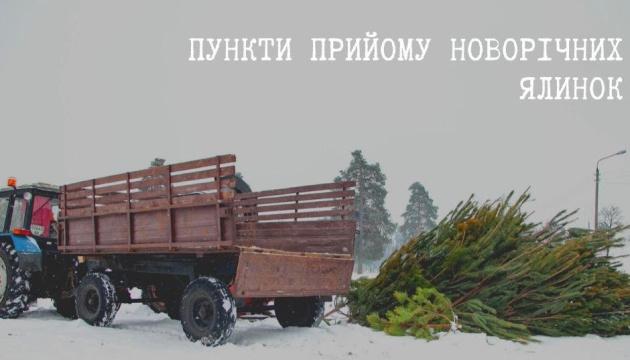 У столиці запрацювали 15 пунктів прийому новорічних ялинок