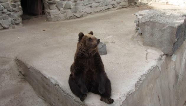 Ведмеді у Менському зоопарку вкладаються спати