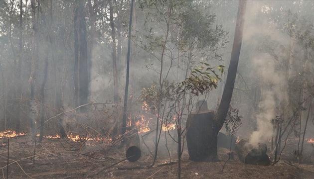 Франция предложила помощь Австралии в тушении лесных пожаров