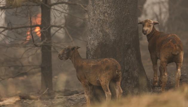 Incendies en Australie : Plus d'un milliard d'animaux morts dans les flammes