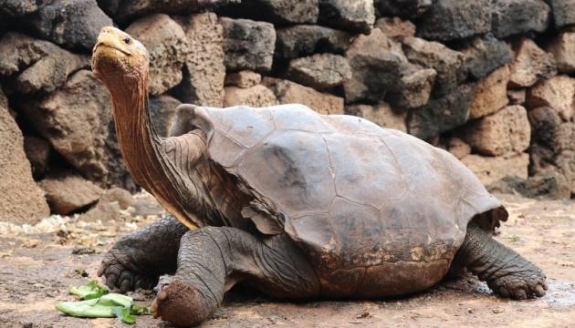 Столетнюю черепаху, которая спасла весь свой вид, отпустят на волю
